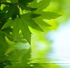 Devenir vert… pas juste une question de couleur!